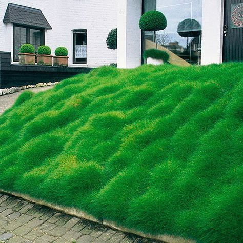 b renfellgras vorgarten eingang modern haus. Black Bedroom Furniture Sets. Home Design Ideas
