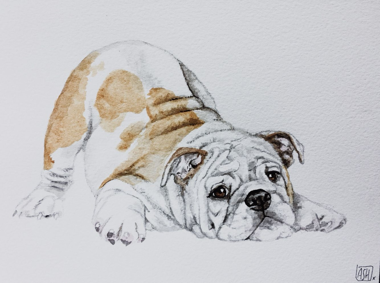 Barni The English Bulldog In Watercolour Bulldogpainting