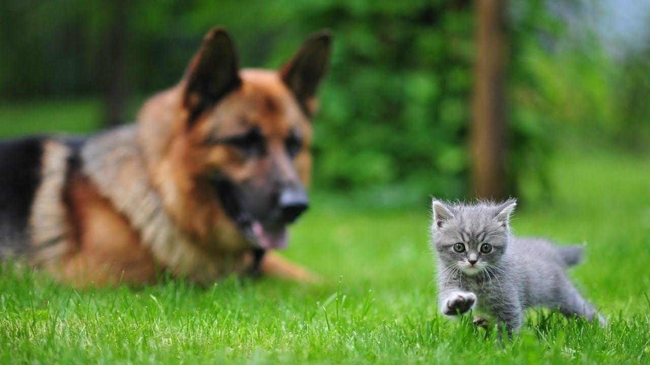 Funny Cats And Dogs Compilation 2018 With Images Cute Animals Funny Cats And Dogs Animals