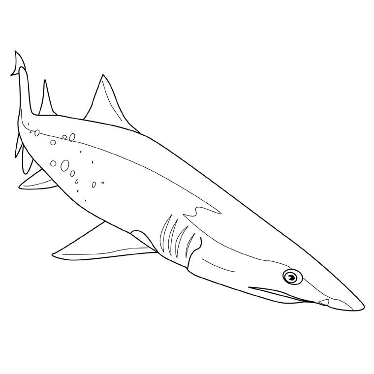 Coloriage Gratuit Requin.Coloriage Requin Scie Nautical Coloriage Requin