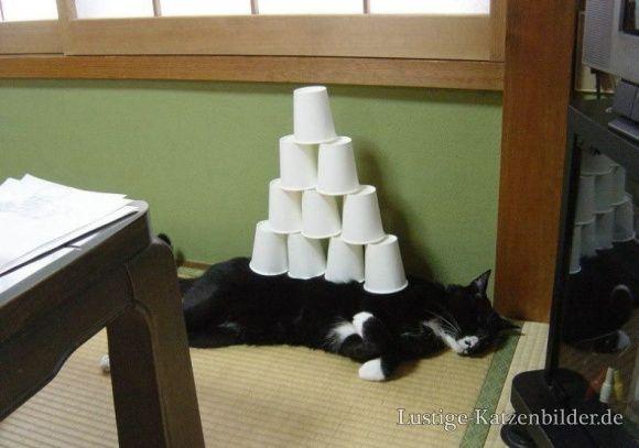 Lustige Katzenbilder und lustige Katzenfotos | muede-katzen-bilder | lustige_katzenbilder_ad151