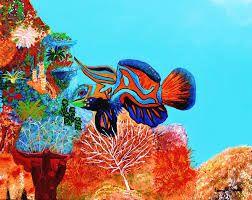 Ikan Cupang Qu