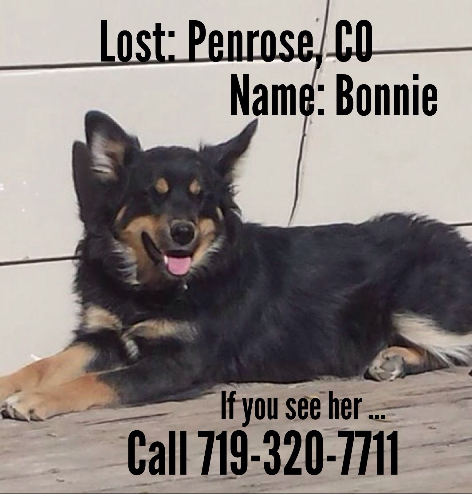 URGENT Have you seen Bonnie? This friendly girl has been