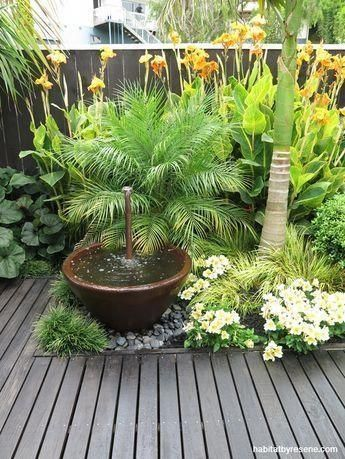 plant outdoors #OutdoorPlants #tropischelandschaftsgestaltung