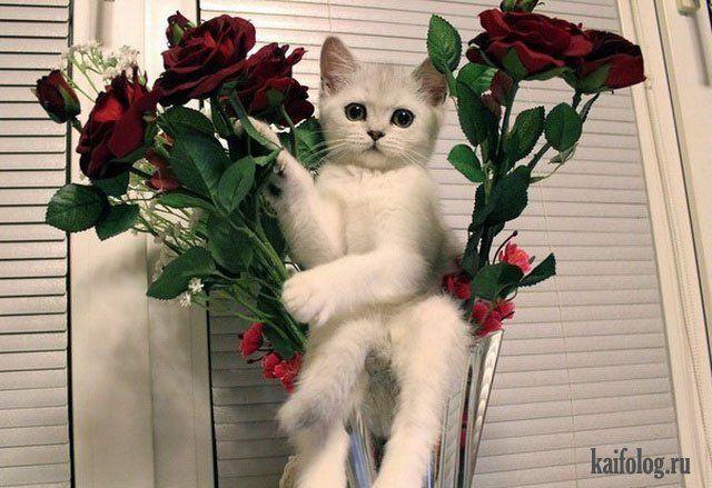 Лучшие фото приколы (55 фото) | Смешные фото кошек ...