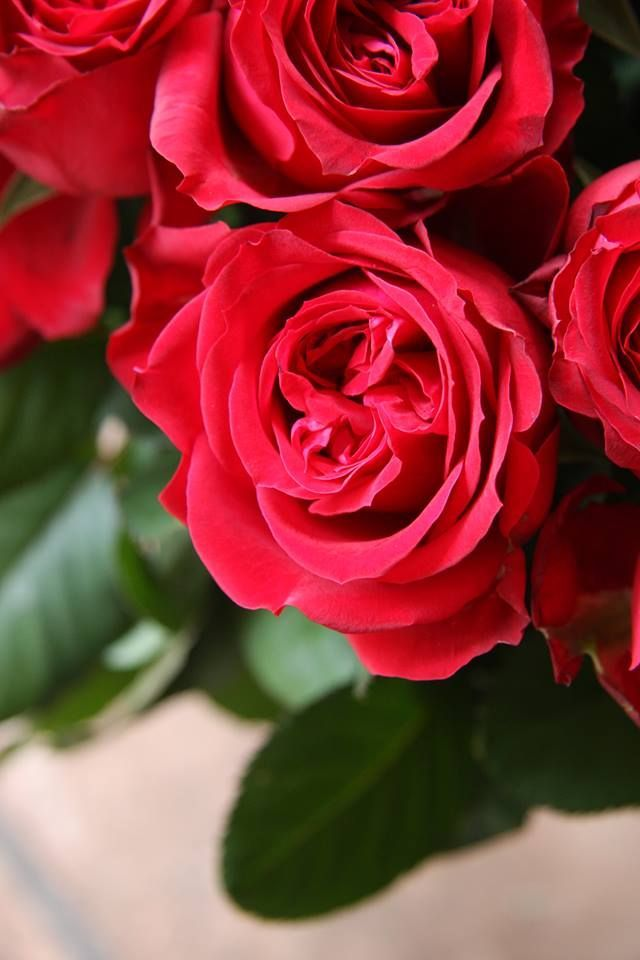 Love Garden Roses: The Secret Garden Of My Soul