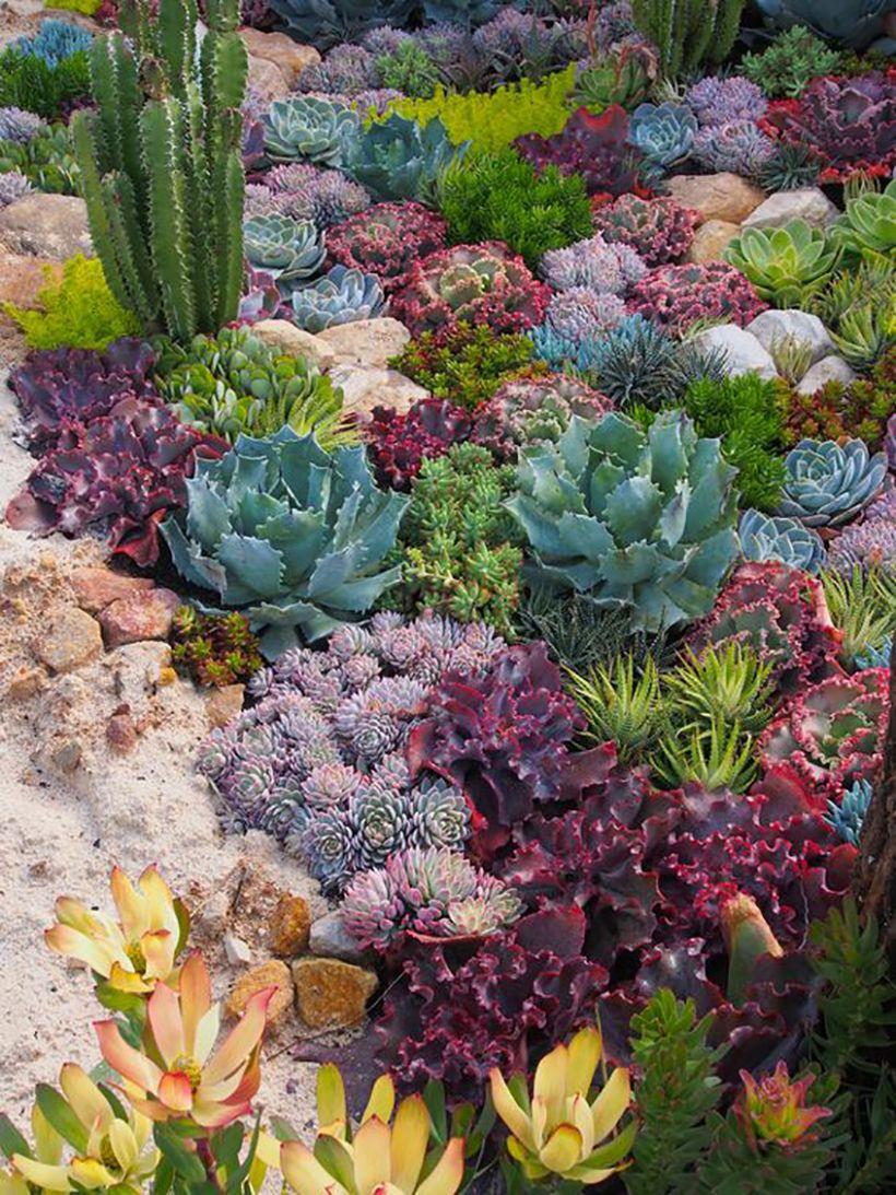 These Are The 10 Dreamiest Gardens On Pinterest Succulents Succulent Landscape Design Succulent Garden Design