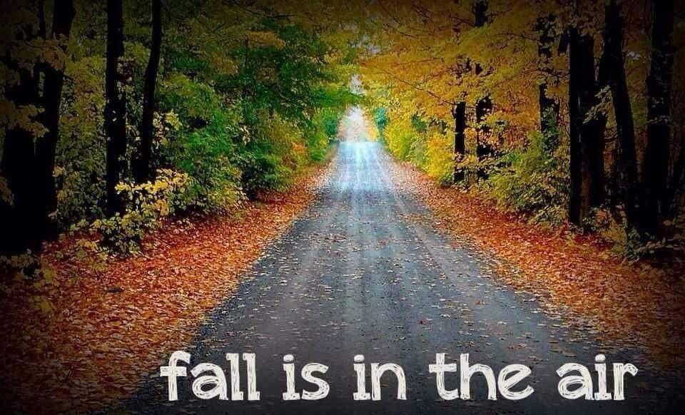 Pin by Cyndy Simons on fall fantasies Fall garden