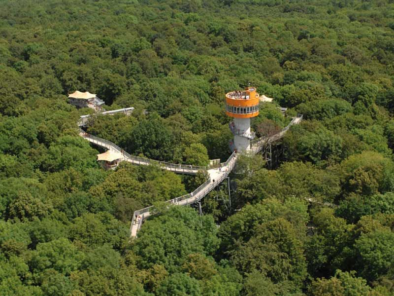 Treetop Trail World Heritage Wartburg Hainich Culture Loves Nature Com Kultur Natur