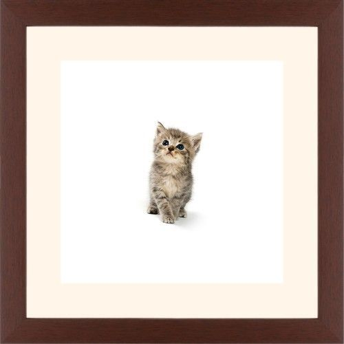 Kitten Framed Print, Brown, Contemporary, White, Cream, Single piece, 12 x 12 inches
