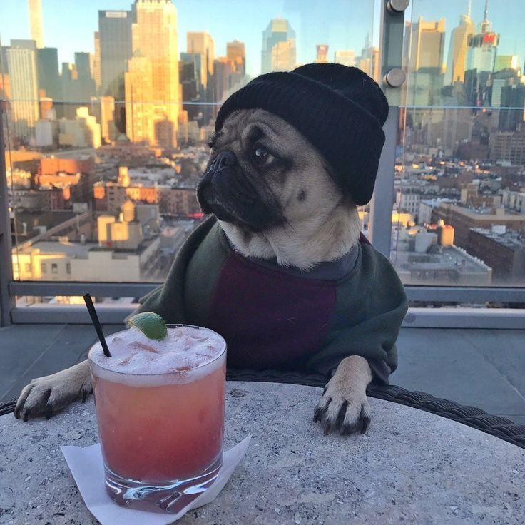 Doug the pug itsdougthepug twitter what you wish your