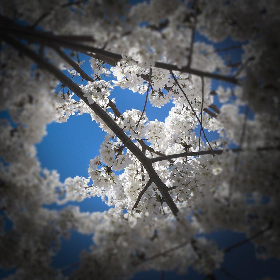 Springtime! Copyright © 2013 Andy Spessard Photography