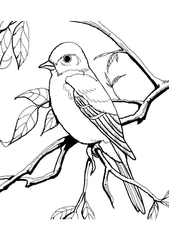 Coloring Pages Amazing Tweety Bird Looney Tunes Freeable Pictures ... | 842x595