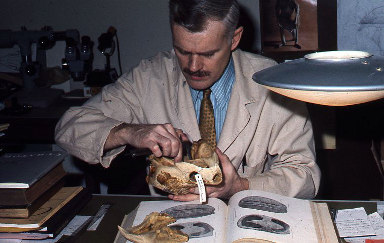 Chair of Paleontology Bruce Erickson is working on a turtle back in - bruce erickson