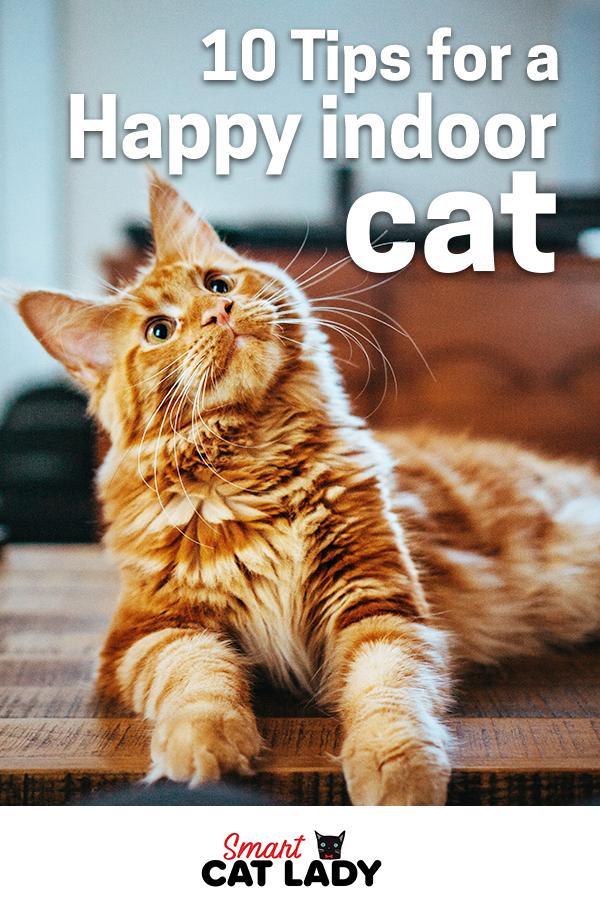 10 Tips For A Happy Indoor Cat Indoor Cat Cats Pets