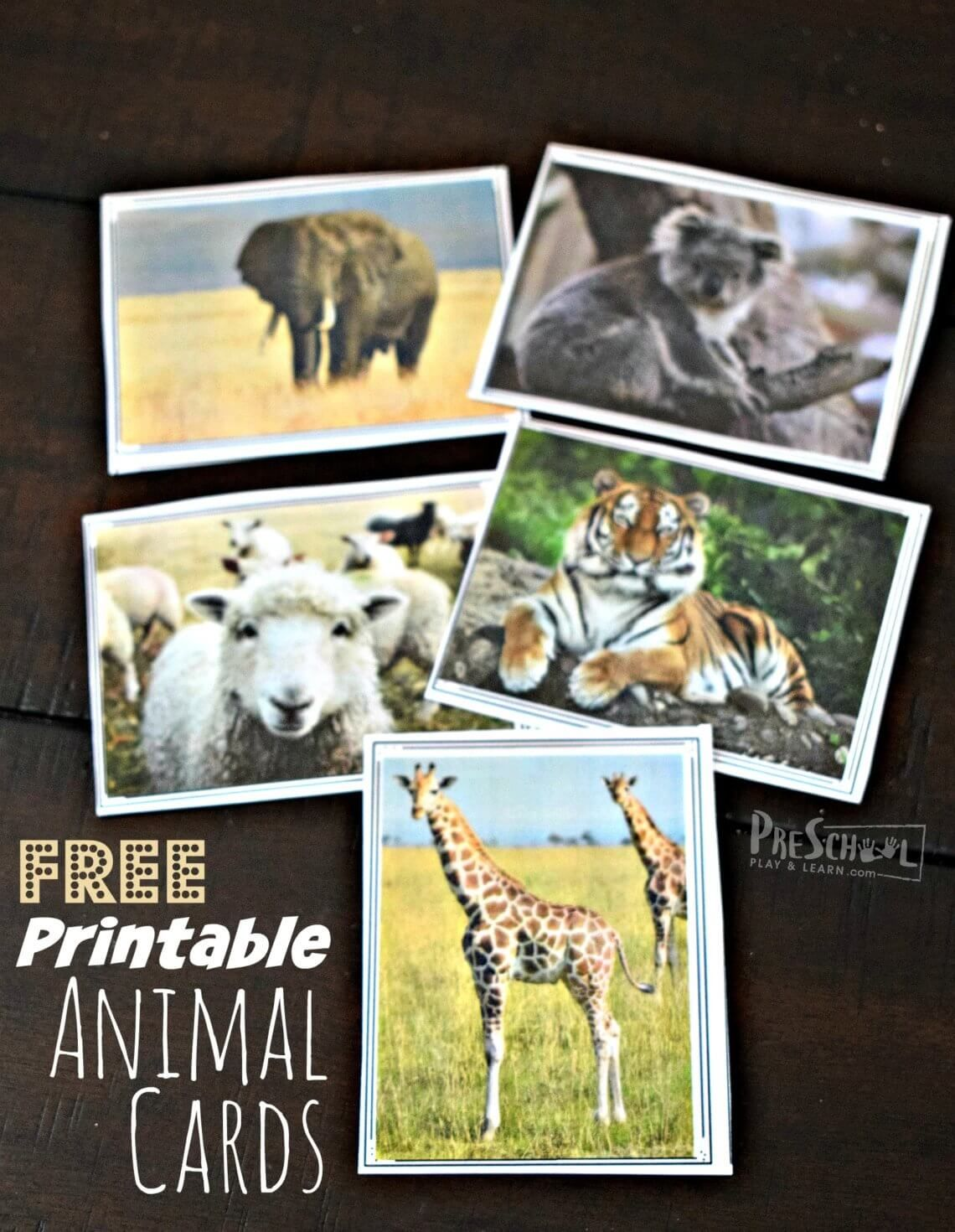 Free Printable Animal Cards For Montessori Activities