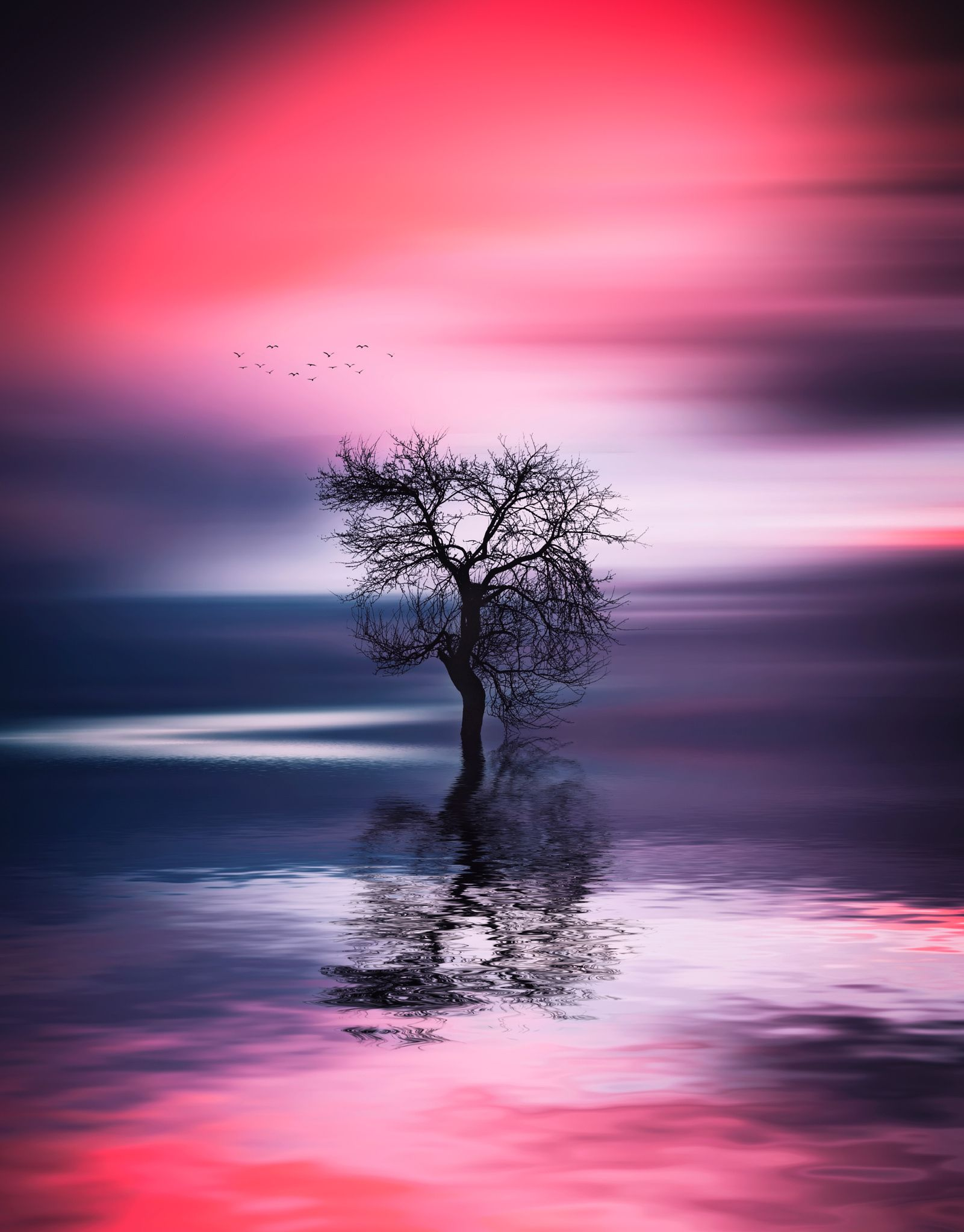 Tree in lake - http://instagram.com/bess_hamiti/  https://www.facebook.com/044555323bessi https://500px.com/Besmir  https://twitter.com/BessiHamiti7