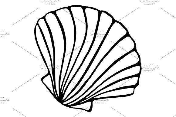Art Sketch Vector Shell Sea Seashell Isolate Ink Line