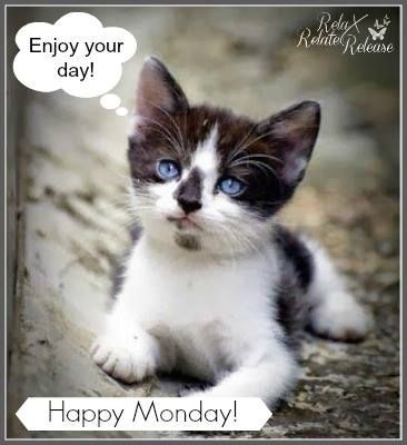 Enjoy Your Day Happy Monday With Images Kittens Cutest