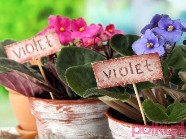 9 Roslin Domowych Dla Zabieganych Plants Polki