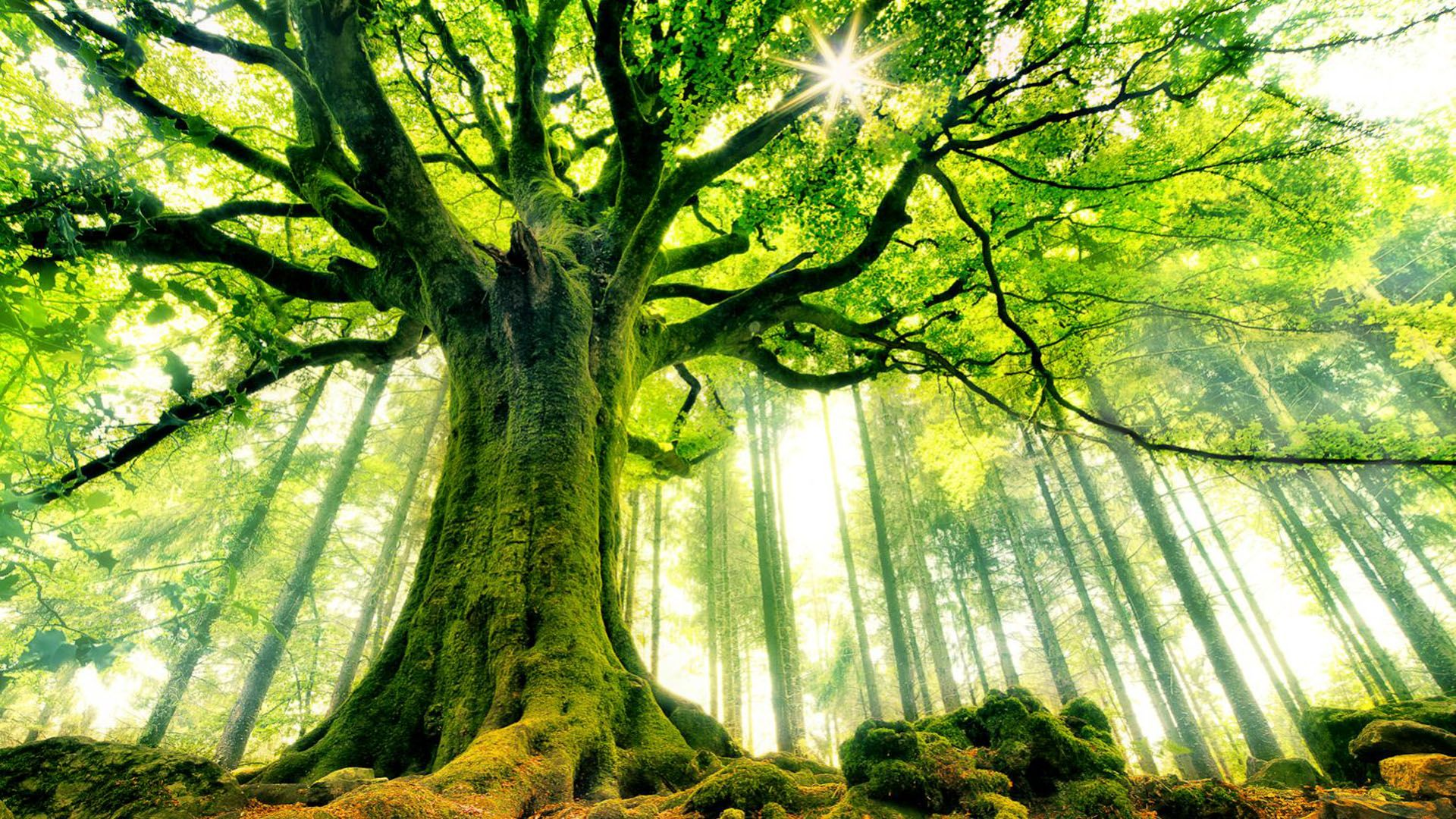 Ancient Tree Hd Wallpaper Cool Wallpapers Fotografii Prirody Nastennaya Rospis V Vide Derevev Naturalnyj