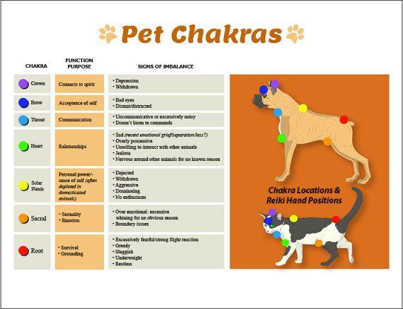 dog cat 7 chakras printable chart poster pet reiki hand positions