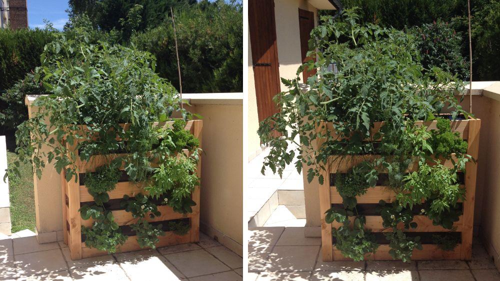 potager vertical botanic un mois