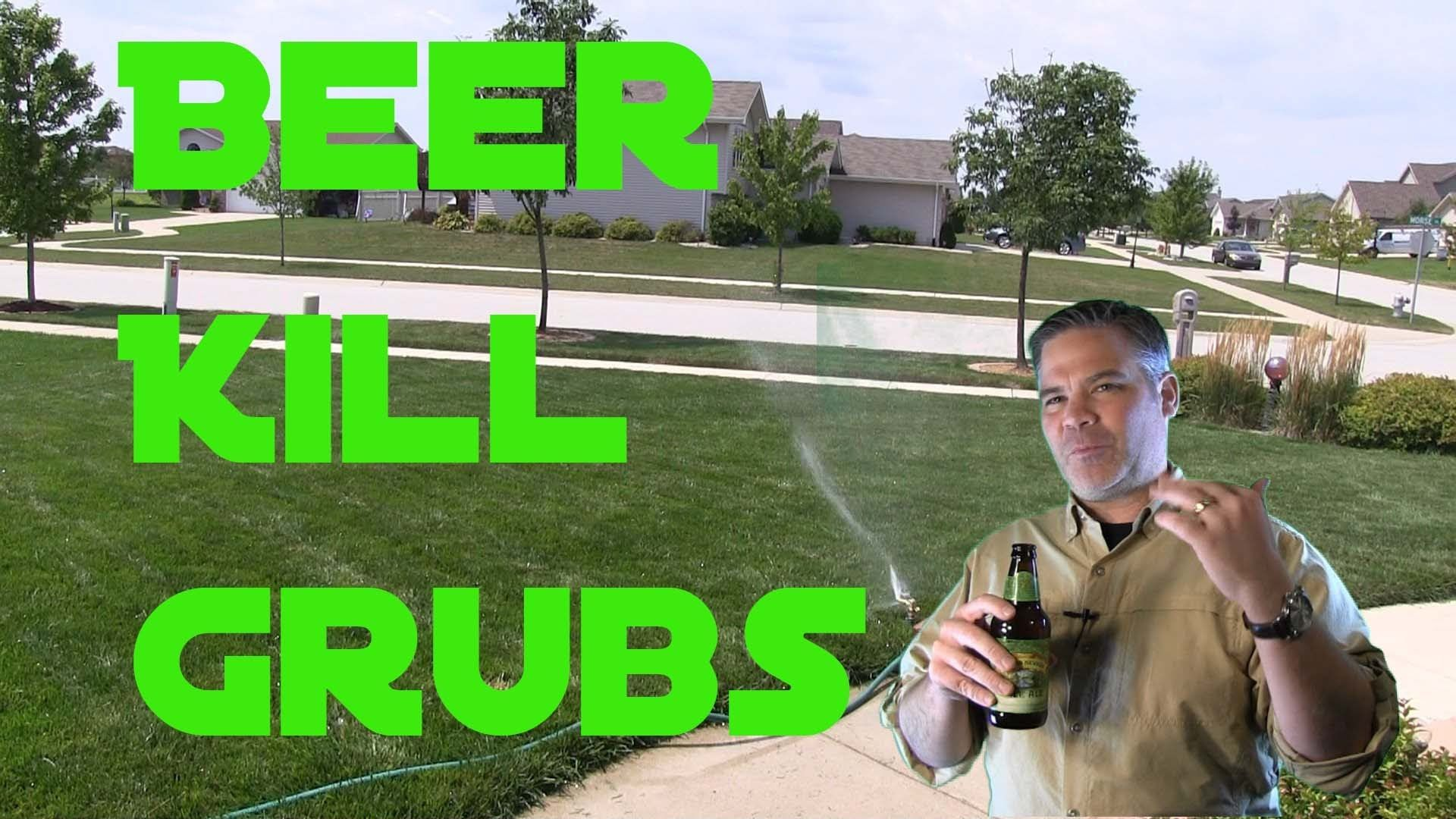 Can Beer Be Used To Kill Grub Worms In The Lawn Grub Worms