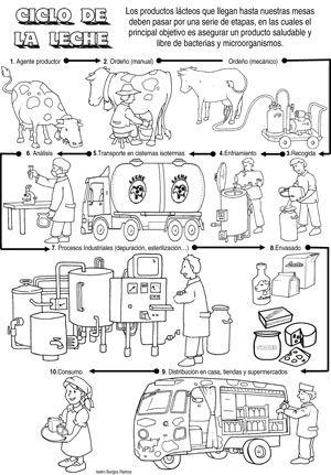 Ciclo de la leche, de la energía y de las rocas. | PARA IMPRIMIR ...