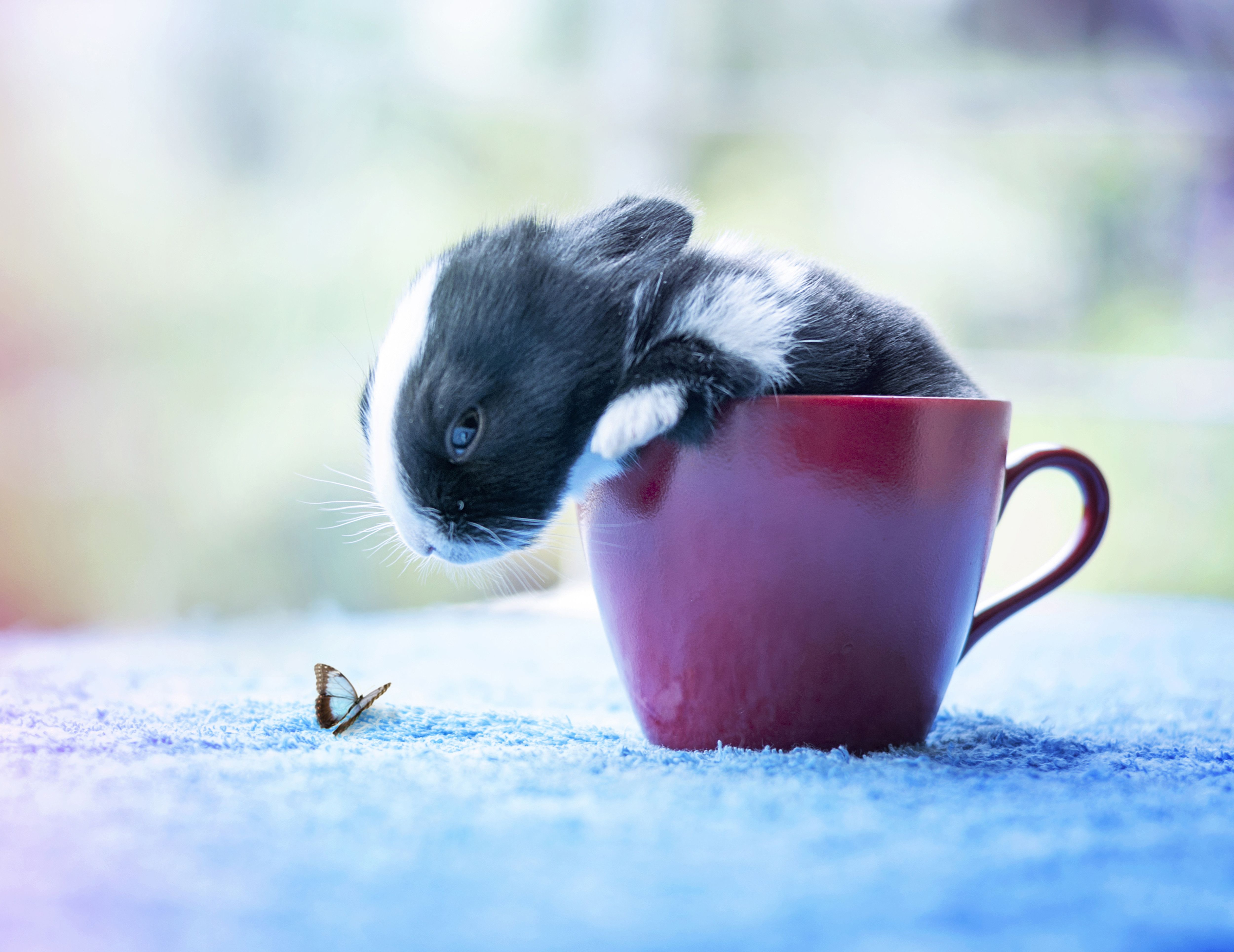 Thursday's Awesomeness: Watch This Bunny Grow!