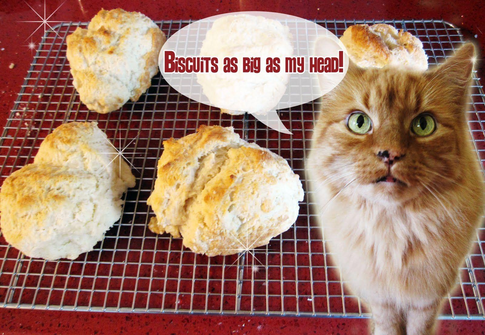 cat head biscuit Homemade cat treats recipes, Cat head