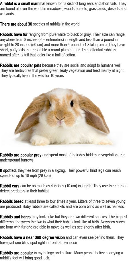 Rabbit Facts for Kids | For kids, Facts and Kid