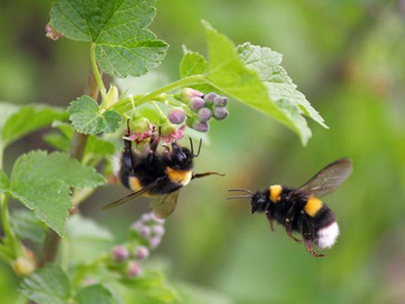 7 lebensmittel die l stige insekten vertreiben for Fruchtfliegen pflanzen