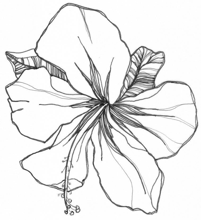 Hibiscus Flower Drawing Easy Hibiscus Flower Drawing Beautiful