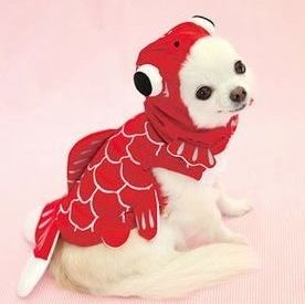 fish costume for dog | red_gold_fish_costume_for_dog__20464.1330720092.1280.1280.jpg : fish costume for dogs  - Germanpascual.Com