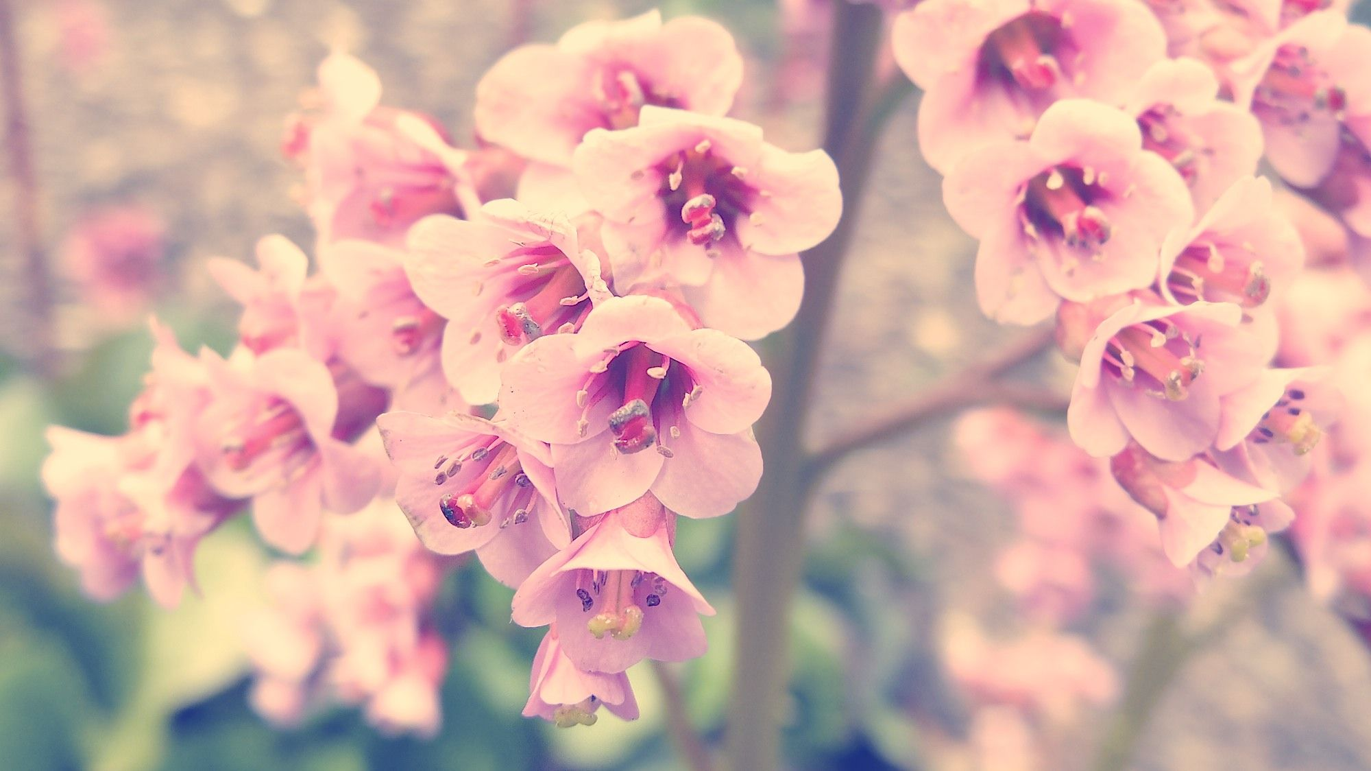 Vintage Pink Flower Photography Hd Pictures 4 Hd Wallpapers