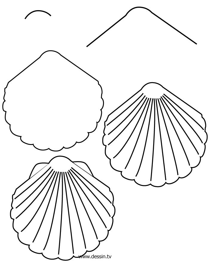 Scribble Drawing Easy : How to draw coral learn a shell with simple