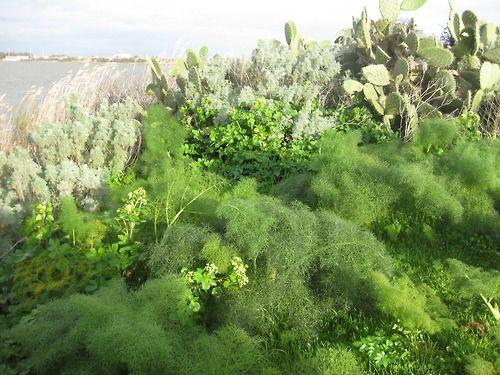 Sardaigne Février 2011 the perfect garden