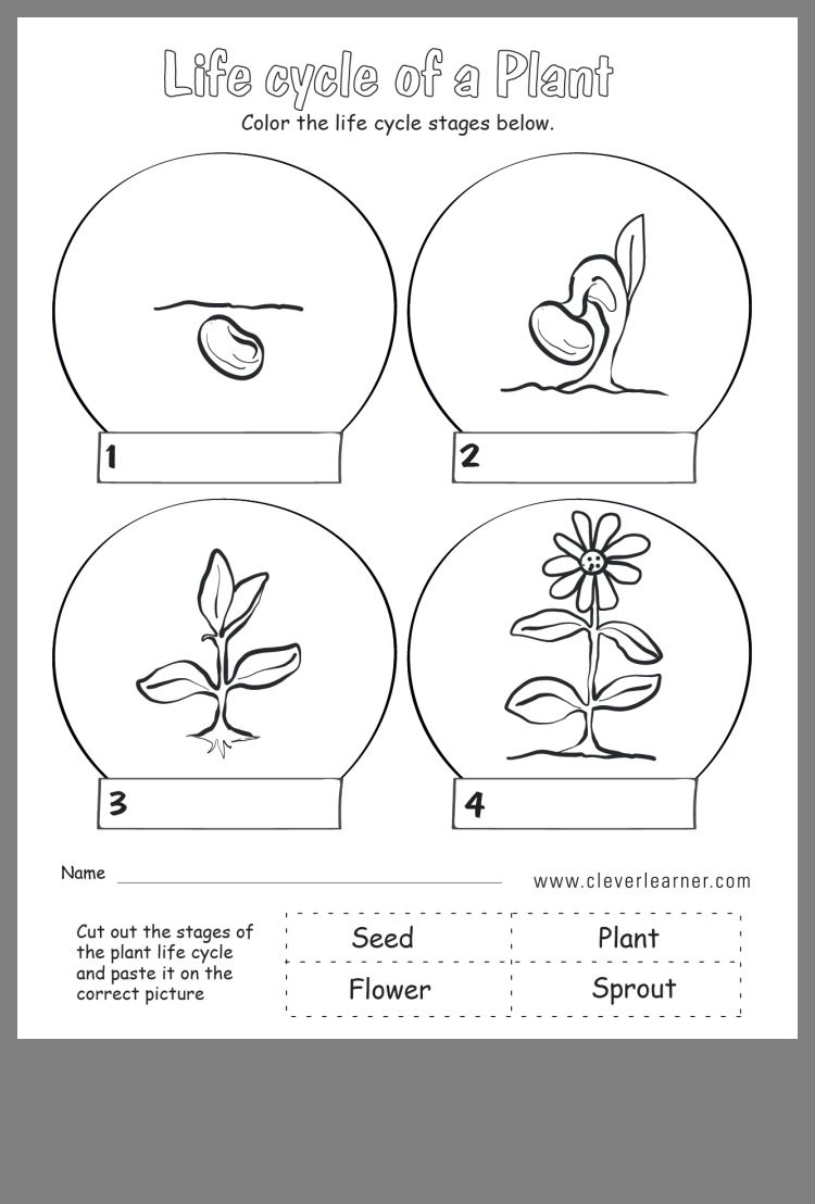 Idea by Ayesha Ansari on Kindergarten Plant life cycle