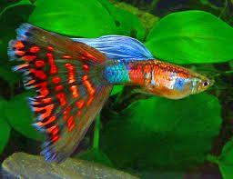 Pin von pedro alvarez auf peces pinterest fische for Salzwasser aquarium fische