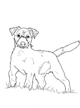 Jack Russell Terrier Coloring Page Super Coloring Dog Coloring