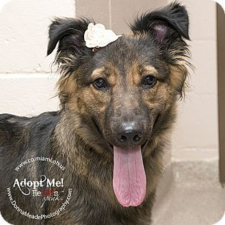 Adopted I Am At A Kill Shelter In Troy Oh Collie Mix Meet Summer A Dog For Adoption Http Www Adoptapet Com Pet 11558558 T Dog Adoption Collie Mix Pets