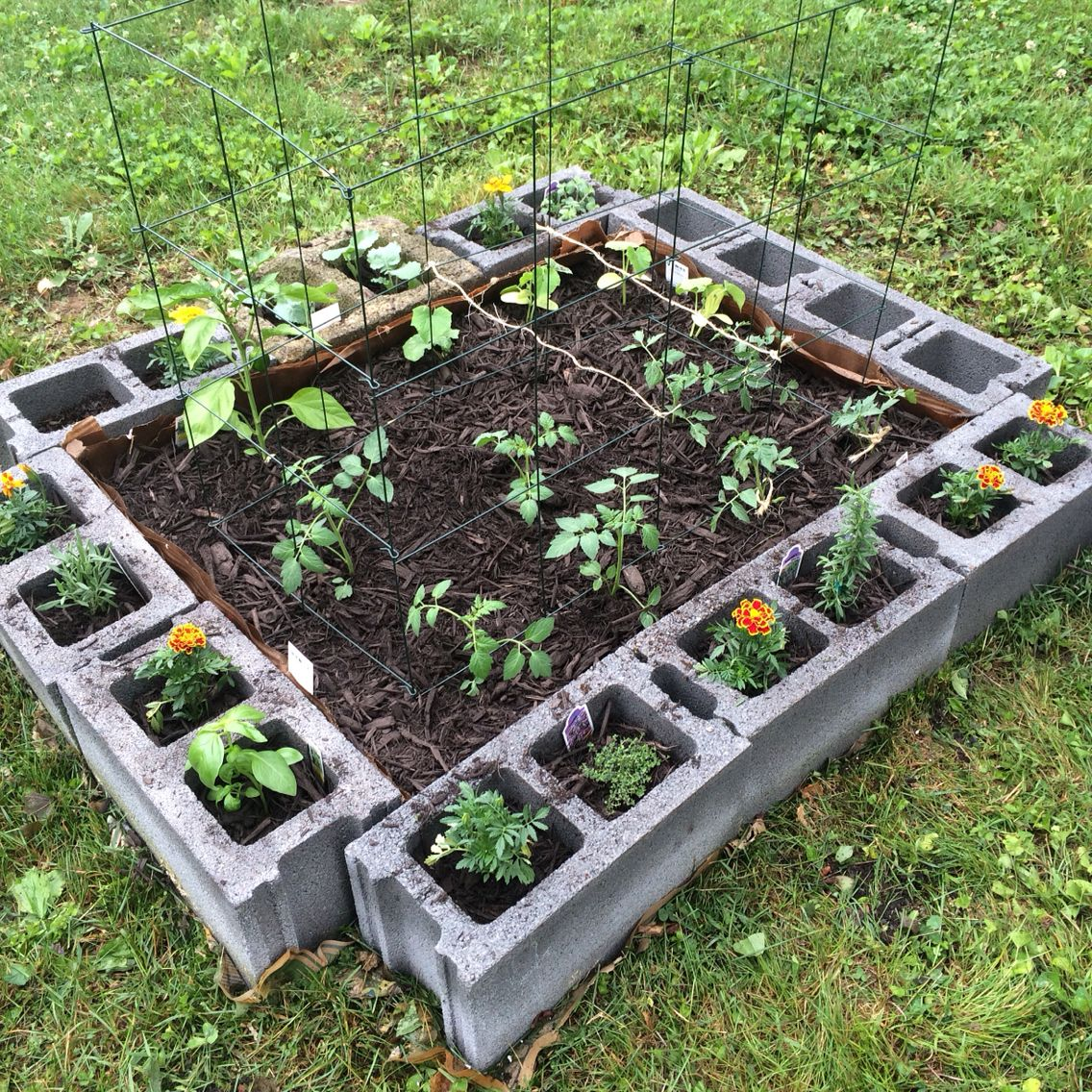 My Raised Garden From Cinder Blocks. Lined It With