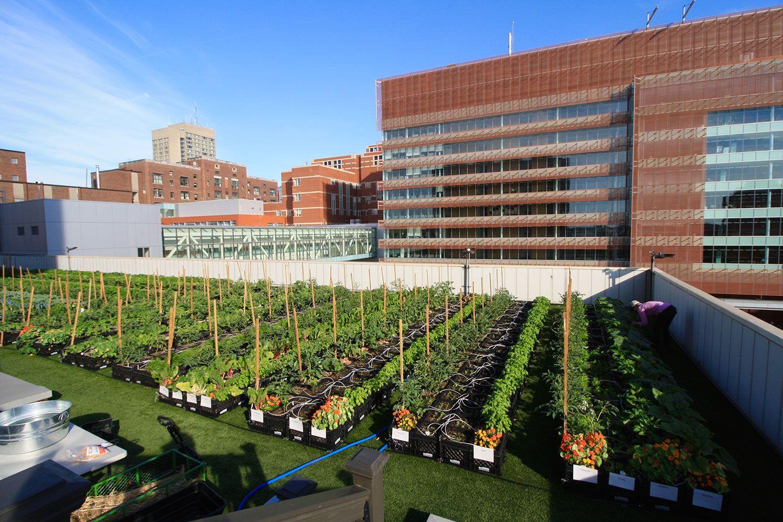 Boston Medical Center Rooftop Farm Green roof, Boston