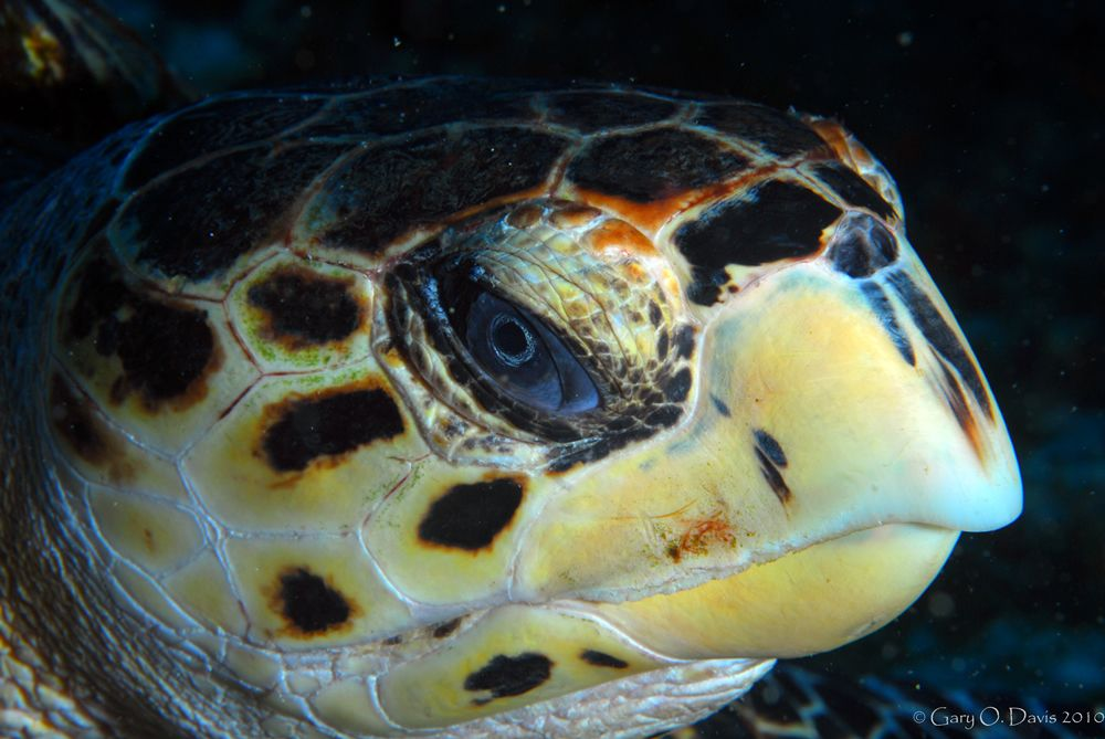 """That's """"Mr Turtle"""" to you.   Diving in Cozumel with Action Scuba 2010"""