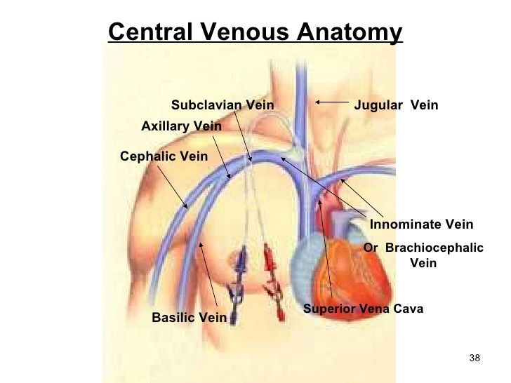 Central Venous Anatomy Cephalic Vein Basilic Vein Superior Vena Cava ...