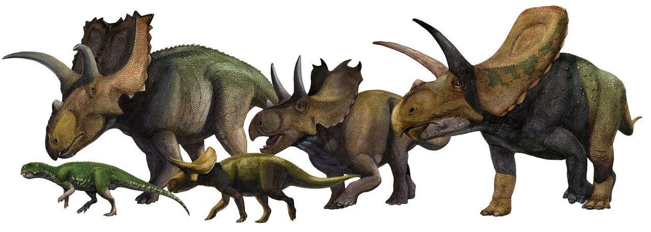 Ceratopsia - Psittacosaurus, Coahuilaceratops, Turanoceratops, Agujaceratops, Torosaurus - Sergey Krasovskiy