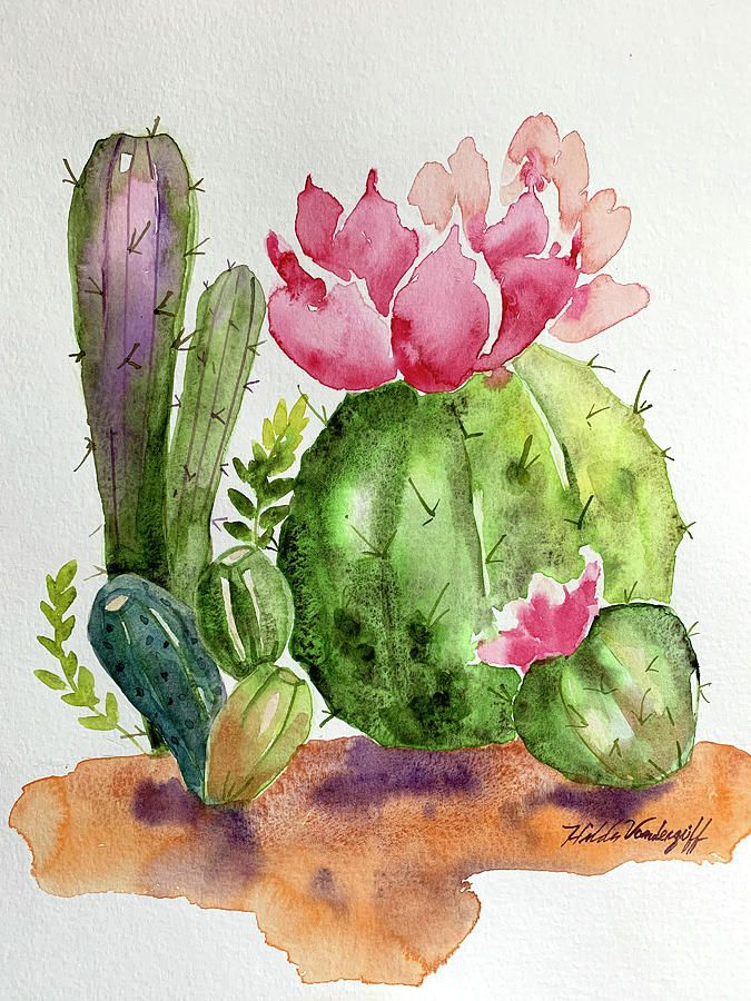 Cactus and Succulents by Hilda Vandergriff