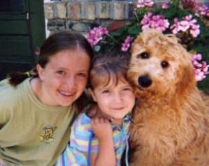 Goldendoodle Breeders In Minnesota Mn Red Cedar Farms Goldendoodle Breeders Goldendoodle Goldendoodle Puppy For Sale