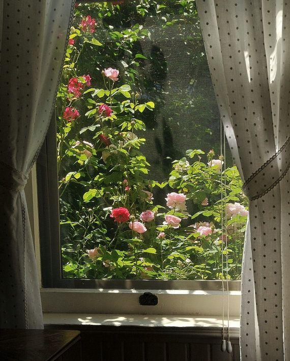 Roses through the antique window photo, Victorian